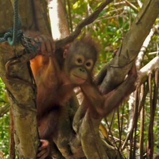 Family Borneo