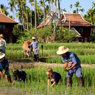 Family Thailand