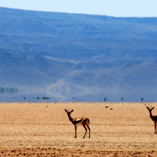 Picture of Djibouti Wildlife