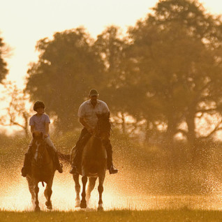 Four horses cantering