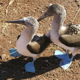 Family Galapagos