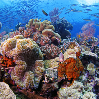 Picture of Beautiful Wakatobi reef