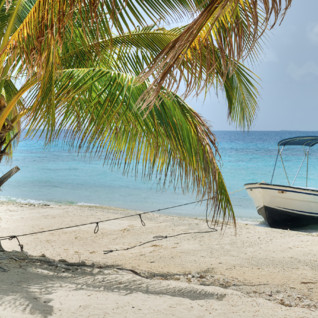Picture of boat on palm tree Belizean coast