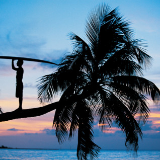 Picture of a surfer on palm tree