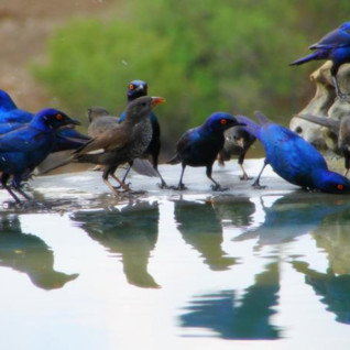 Birds at Meno A Kwana, luxury camp in Botswana, Africa