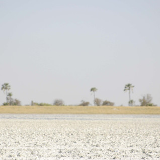 Botswana Photographic Safaris