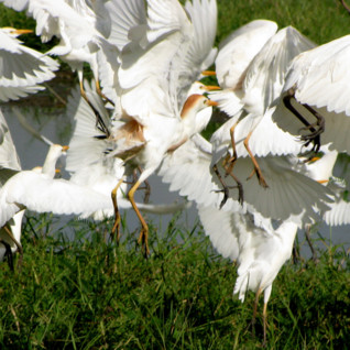 Birding Safaris in Botswana
