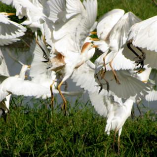 Birding Safaris in Botswana