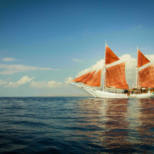 SeaTrek Cruises