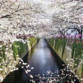 Tokyo, Kyoto & Beyond