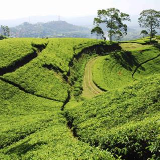 landscape in bandung in Java