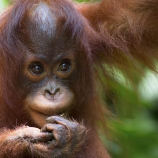 Honeymoon Borneo