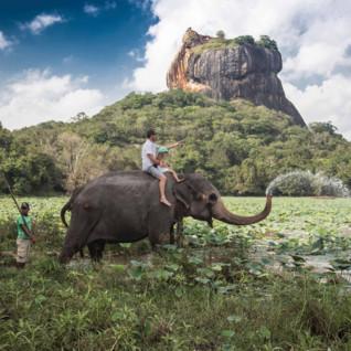 An Elephant at Sigiriya Rock