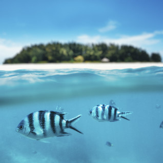 Tanzanian Coast Fish