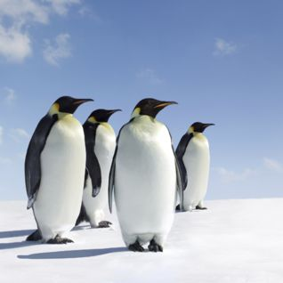 Penguins, Antarctica