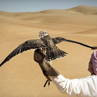 Falconry, Dubai