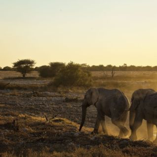 Elephants in Zambia