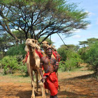 Laikipia Camels, Kenya