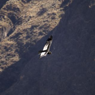 Condor Cross, Peru