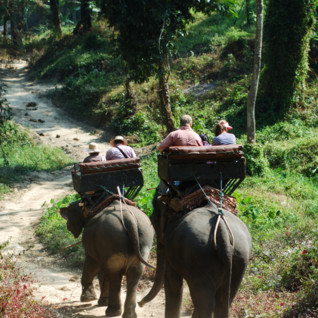 Elephant-back or walking treks
