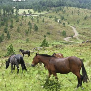 Horse Riding, Cordoba, Argentina