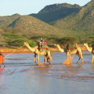 Laikipia Camel Safaris