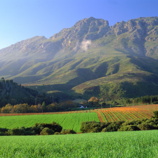 The Winelands and Cape