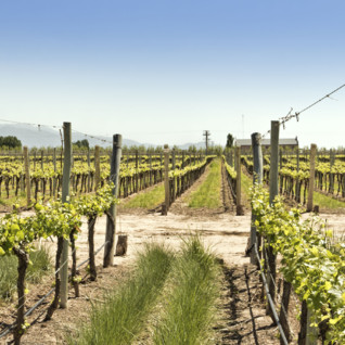Winery Tours in Mendoza