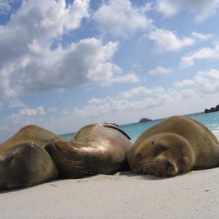 Galapagos Surf & Yoga Safari