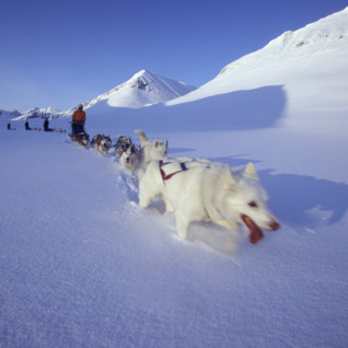 Dog Sledding in Snow