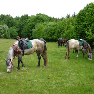 Riding Safaris in Transylvania