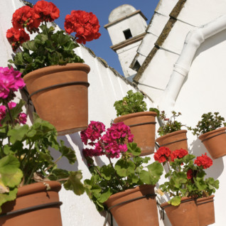 Flowers at Las Casas del Rey de Baeza, luxury hotel in Italy