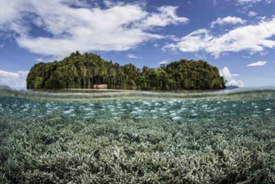 Silversides in Papua New Guinea