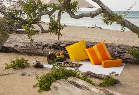 Jungle Beach Picnic