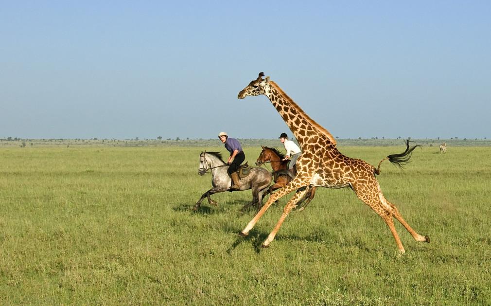 Riding Safaris in Kenya | Luxury Horseback Safari Holidays