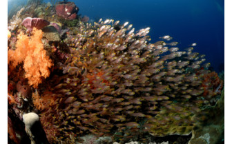 Picture of Fish and coral