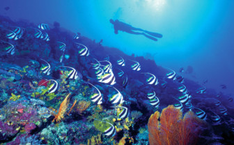 Picture of diver and fish in Fiji