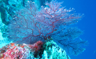 Picture of corals in Seychelles