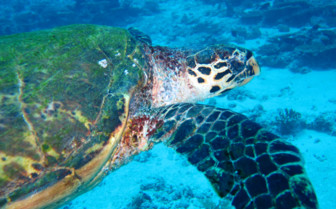 Picture of a turtle in Seychelles