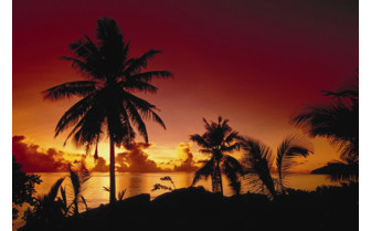 Picture of sunset behind palm trees in Seychelles