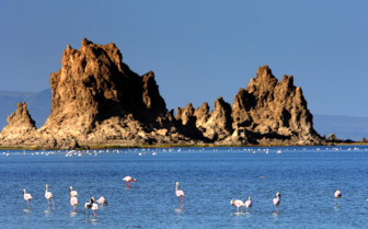 Picture of Flamingos on Lac Abbe