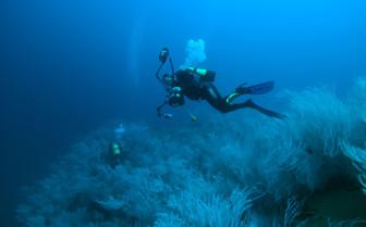 Picture of Scuba Diving in Djibouti