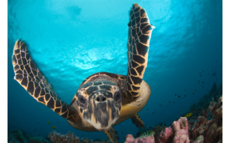 Picture of Turtle at Ningaloo Reef