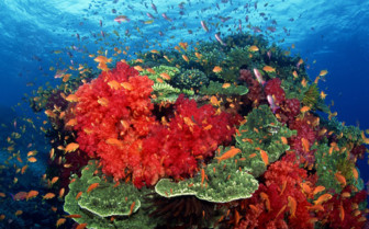 Picture of beautiful coral formations in Taveuni