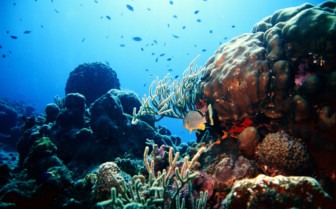 Picture of Beautiful Coral Reef at Bora Bora