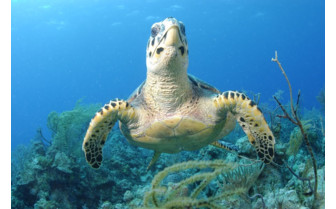 Picture of turtle in Exuma Cays Land and Sea Park
