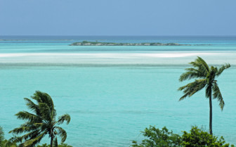 Picture of turquoise sea and palm trees Bahamas