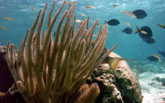 Picture of nice coral in Andros