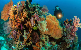 Picture of Diving at Wakatobi