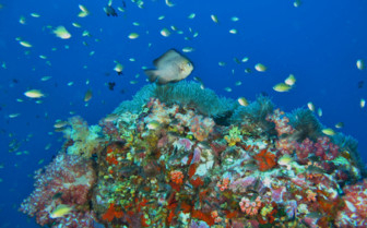 Picture of Anitas reef Similan Islands